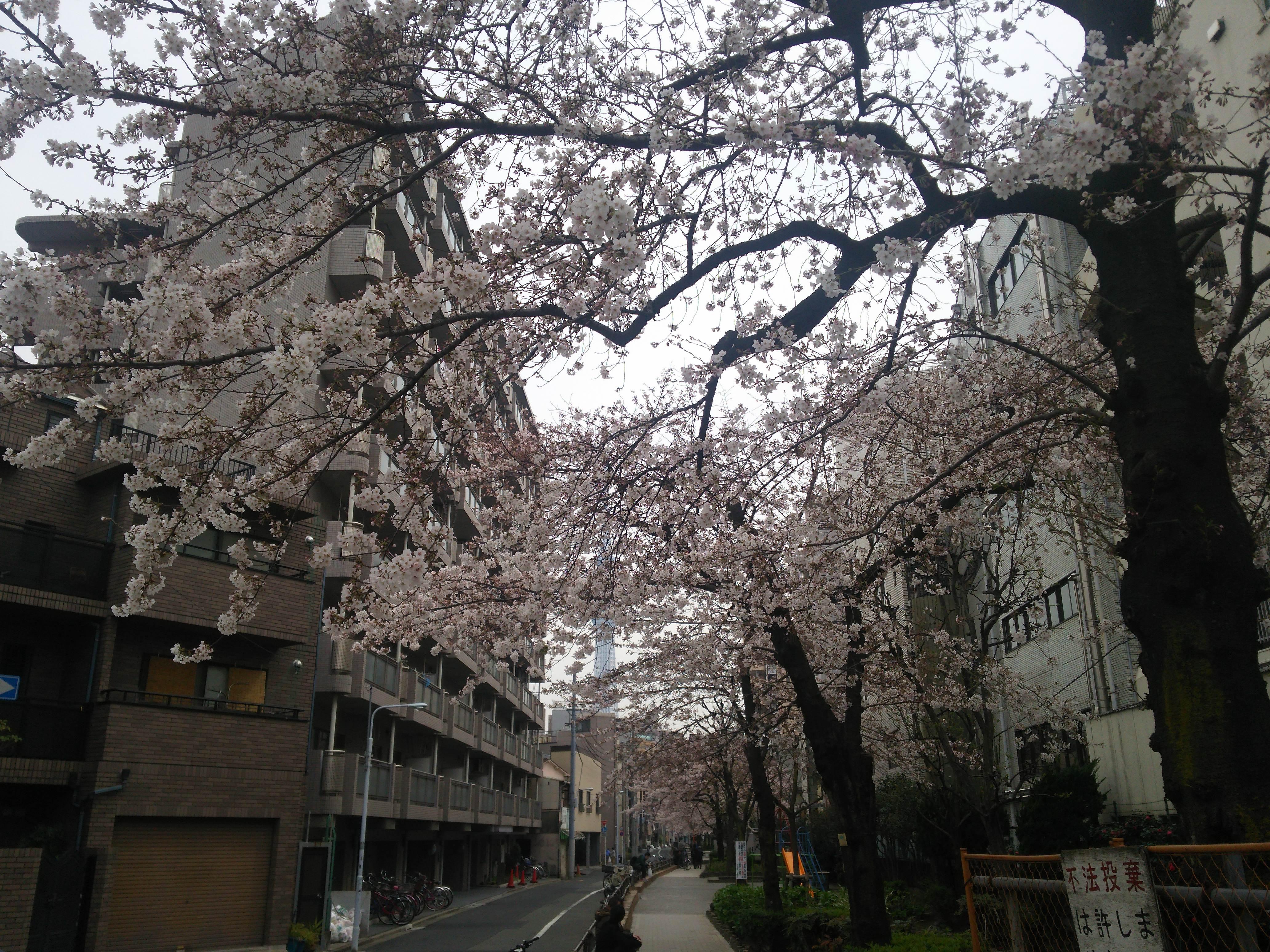 16-03-30-13-03-47-984_photo