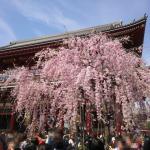 東京浅草のお花見スポット!隅田公園の桜以外にも超穴場スポットが存在する!