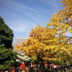 秋の浅草で一味違った都会の紅葉を堪能しよう!